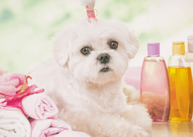 Image of pampered dog