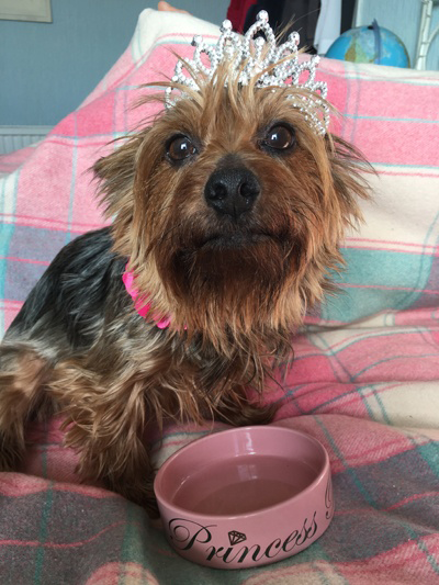 Image of Tilly with 'Princess Paws' bowl