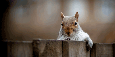 Image of a squirrel