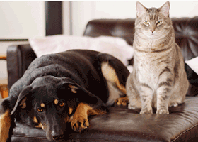 Image of a cat and a dog