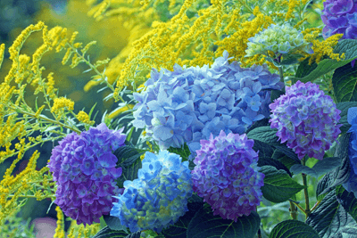An image of yellow and blue flowers