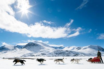 An image of a husky sleigh ride