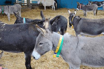 Image of Donkey Sanctuary