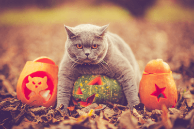 An image of a cat on a pumpkin