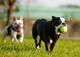 Image of dog with a ball