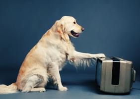 Dog with paw on TV