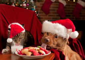 A cat and dog wearing Christmas hats enjoy festive treats