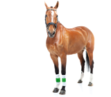 horse_insurance_grid
