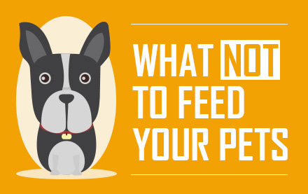 what-not-to-feed-your-pets-thumbnail