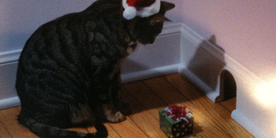 Image of a Christmascat - Phil-Denton