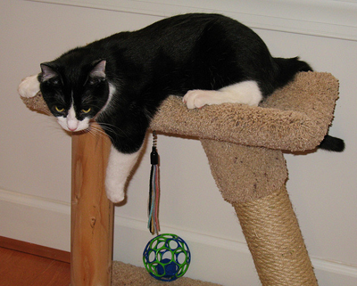 Image of cat on scratching post