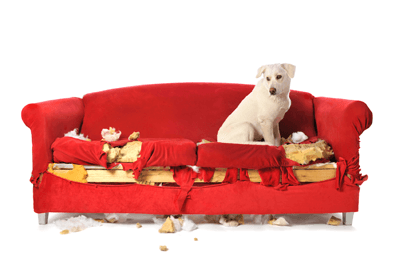 Dog_ripped_up_sofa