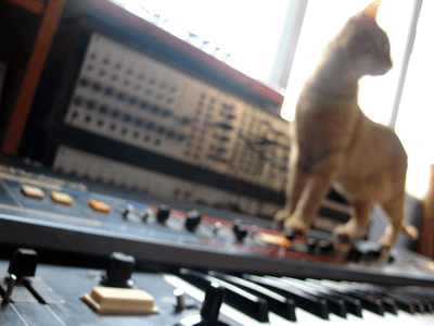 Synthesizers with cat