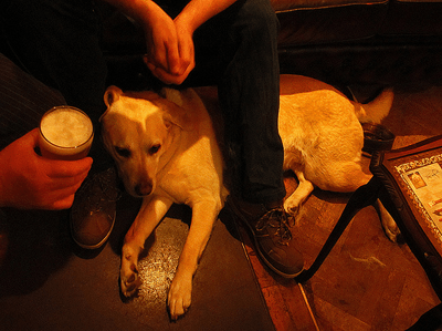 Image of dog in pub
