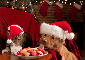 Image of a cat and dog sharing some festive cheer