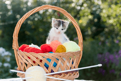 Cat in basket of knitting