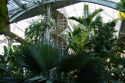 Image of big plants at Kew Gardens