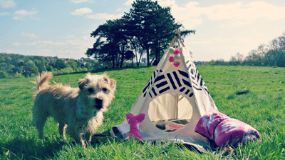 A picture of a dog and his tipi