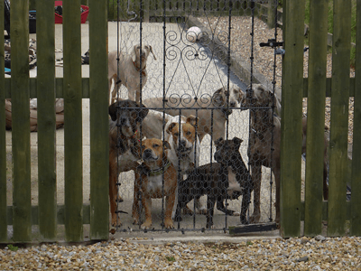A picture of Pippa Unwin's dogs behind a gate