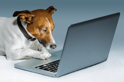 A Jack Russell using a laptop
