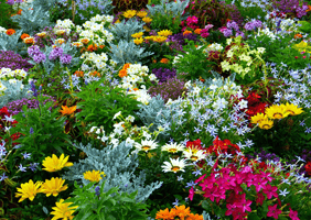 Image of flower garden