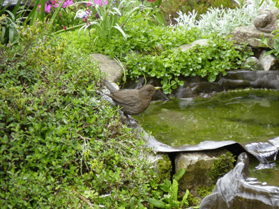 Image of a bird at a pond