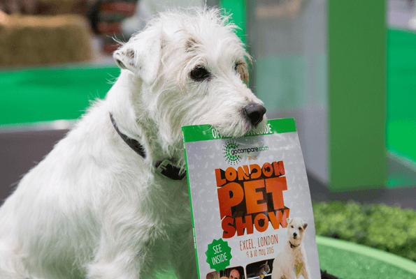 A parson russell holding the London Pet Show guide