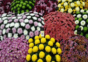 Image of bunches of flowers