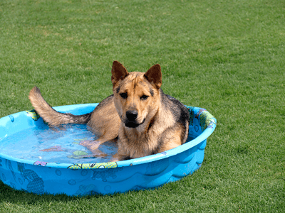 A dog in a paddling pool