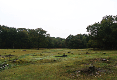 Image of the New Forest