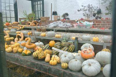 Image of squashes at Wimpole Estate