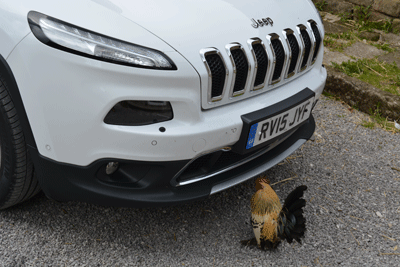 Another image of a rooster by a car