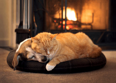 Image of a dog and cat cuddling infront of fire