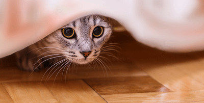 Image of a cat hiding