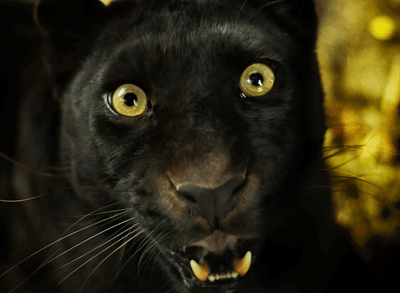 Image of a panther