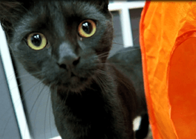 Feline Good Cat Cafe is home to a lucky black cat called Sirius, named after Sirius Black, Harry Potter's Godfather