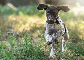 Image of a running puppy