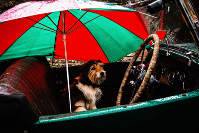 An image of a dog in a car with an umbrella