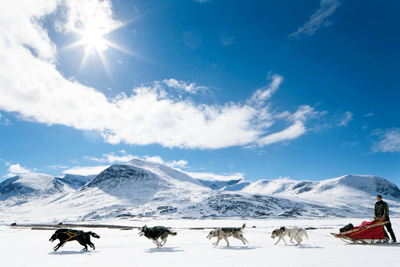 An image of a husky sleigh ride