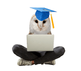 Image of smart owl with laptop