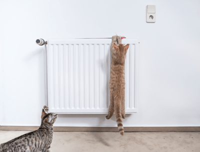 Image of cats on radiator